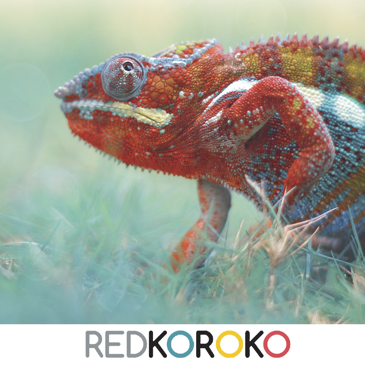 redkoroko marketing externo